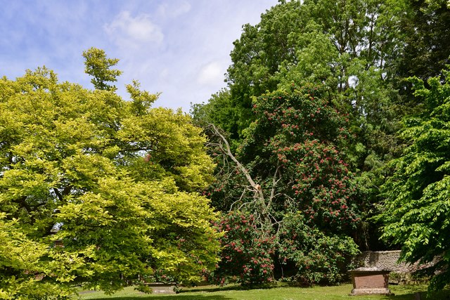 Ledbury, St. Michael and All Angels Churchyard: Horse Chestnut split by a storm