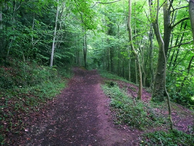Bridleway in nature reserve woodland, Slad