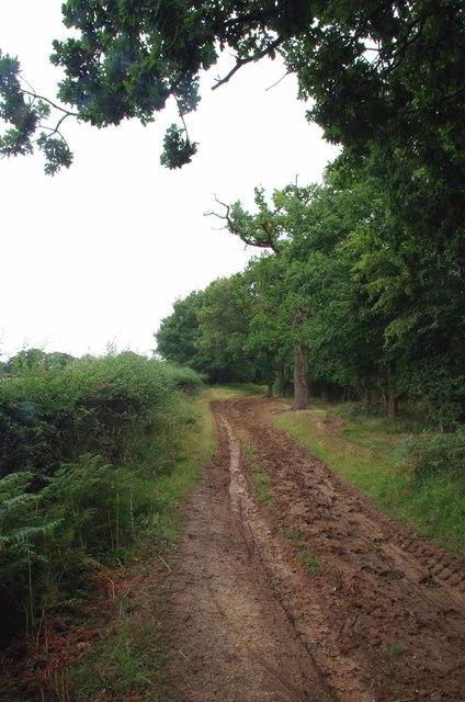Muddy Path Near Brambly Shaw