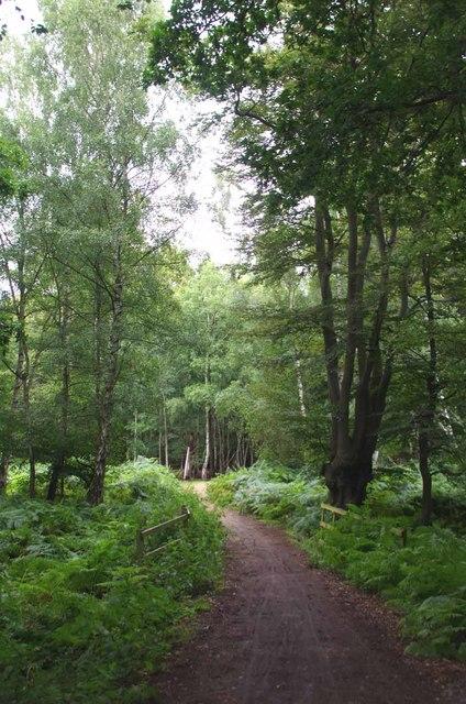 Permissive Bridleway Near Woodridden Hill