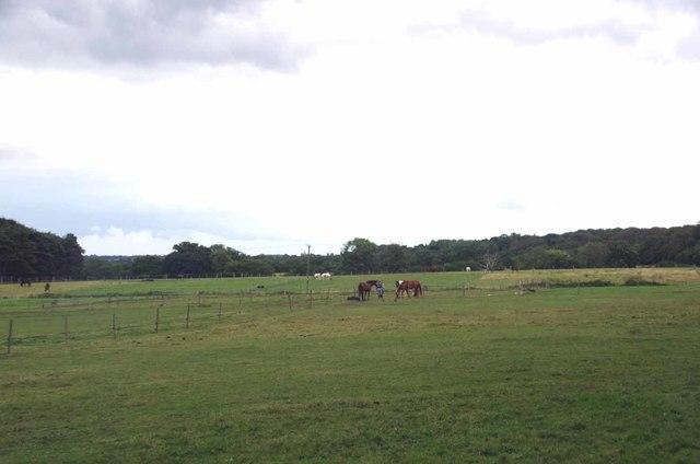 Paddocks on Woodredon Farm