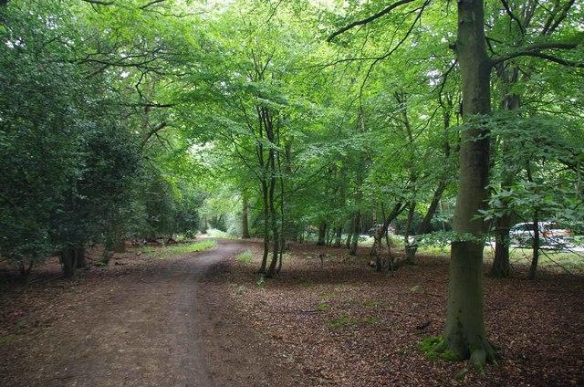 Path Beside Woodridden Hill