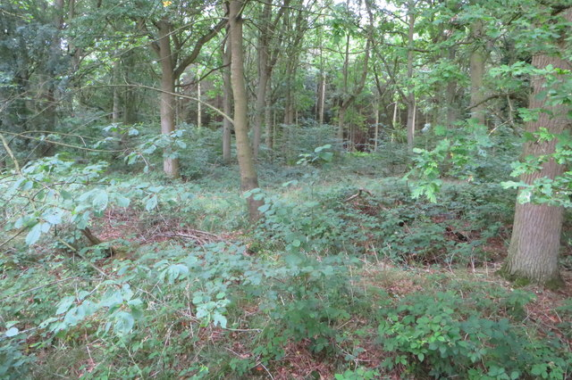 Shortgrove Wood