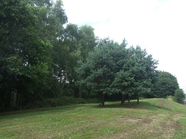 Woodland beside the A38, Bromsgrove