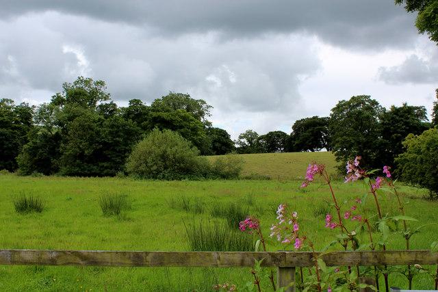 Fields beside Park Brook