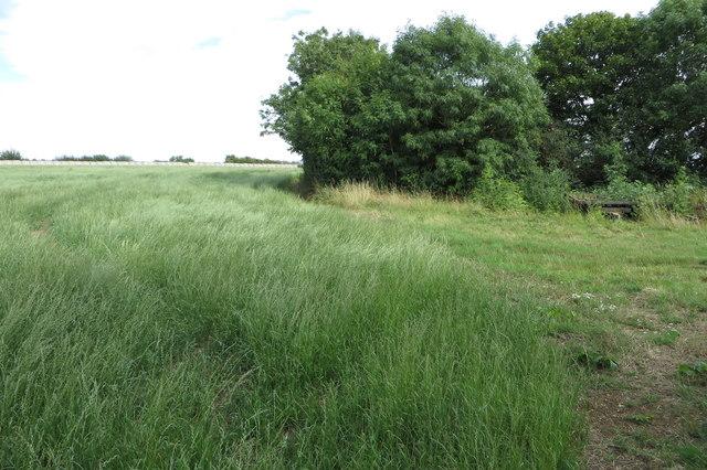 Field by Astwell Castle Farm