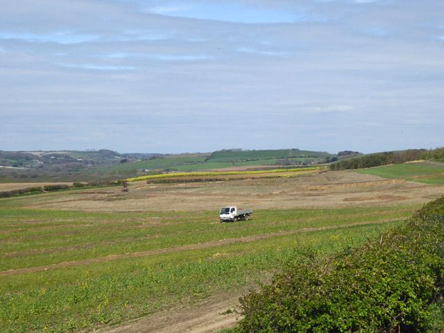 Small truck in field