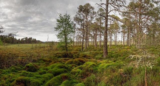 Monadh Mòr bog-forest