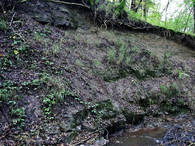 Limestone cliff in Darwell Wood