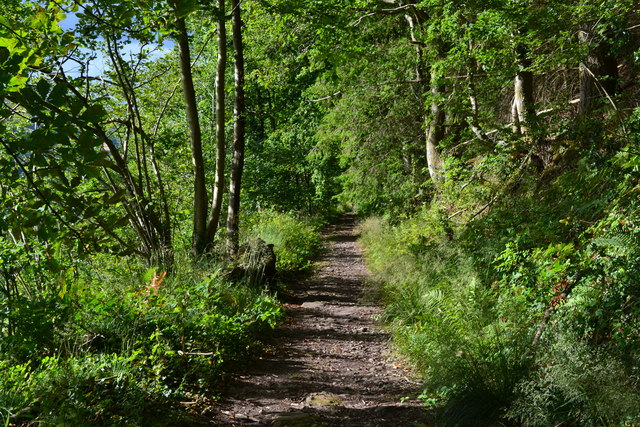 On the Brinore tramroad path