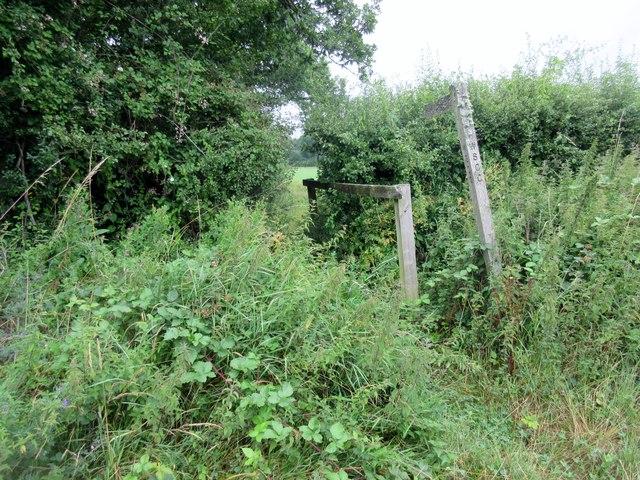Overgrown footpath on footbridge