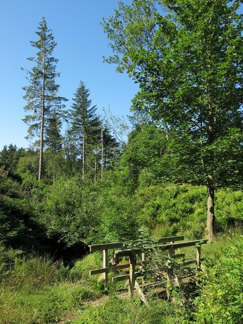 Woodland around Snaisgill Sike