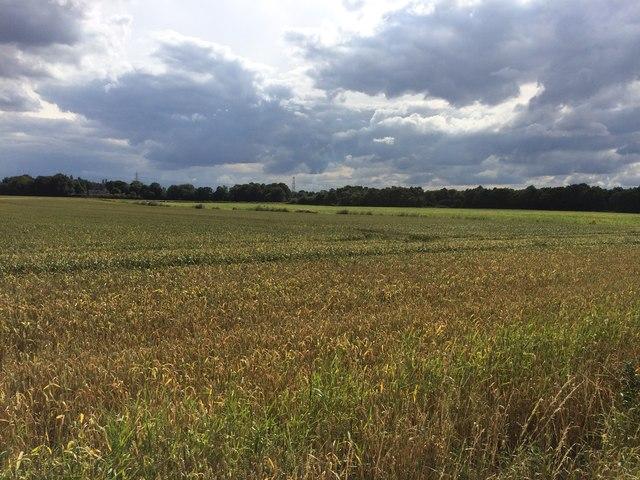 Old Mill Field near Barnby Dun