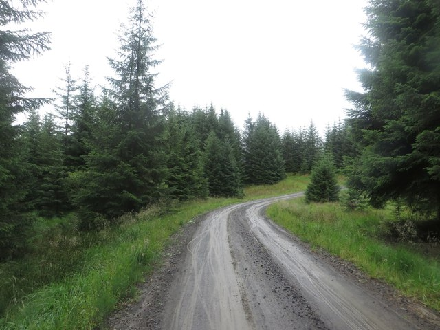 Forest track in Falstone Forest