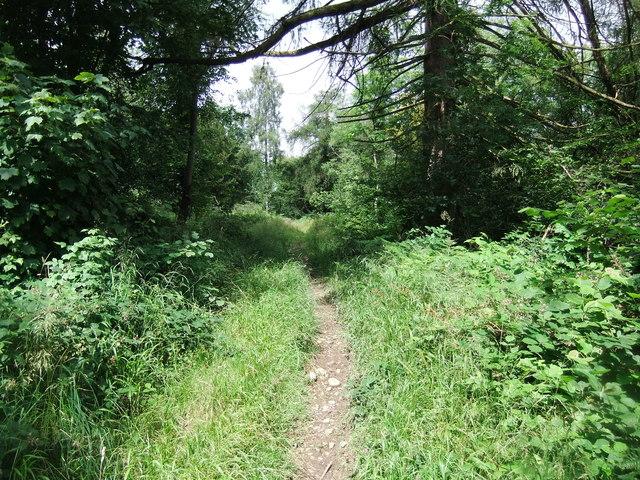 Footpath in Cringlebarrow Wood