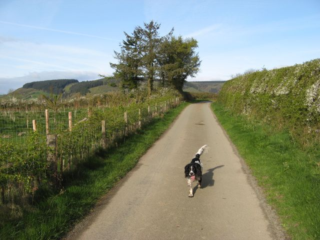 Road to Cwm