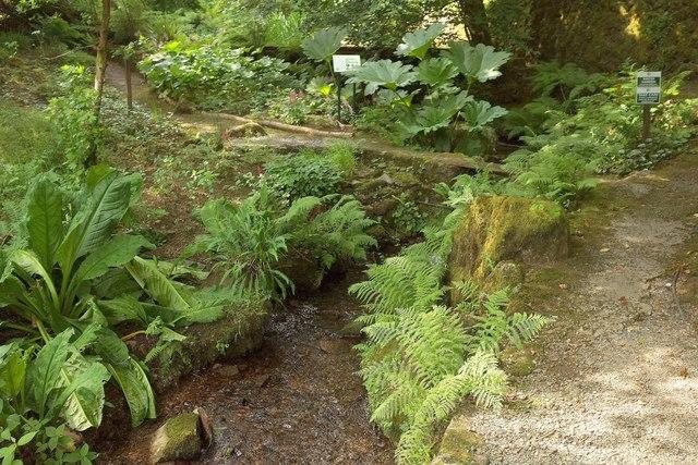 Water gardens, Gidleigh Park