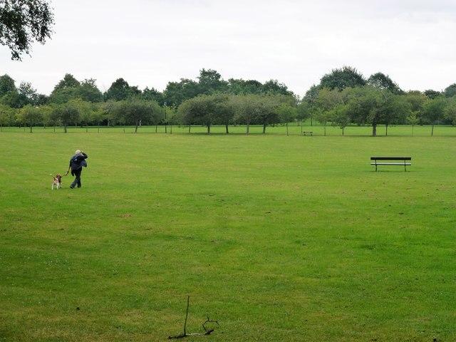 Dog walker on The Stray in Harrogate