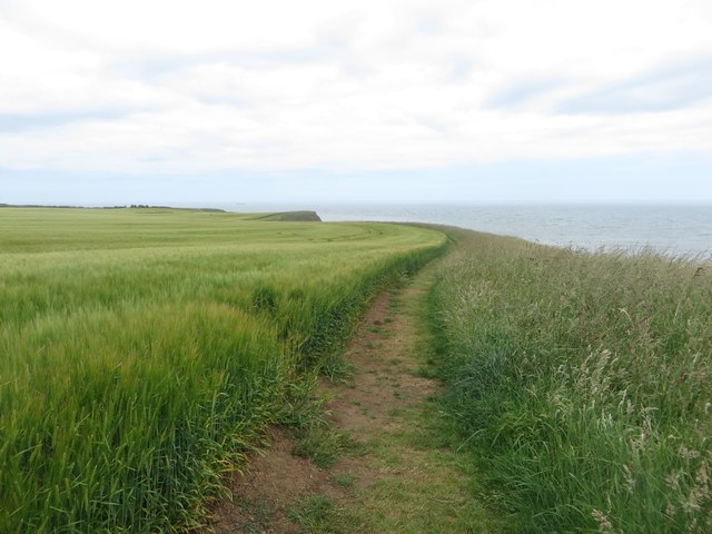 Path between crop and clifftop