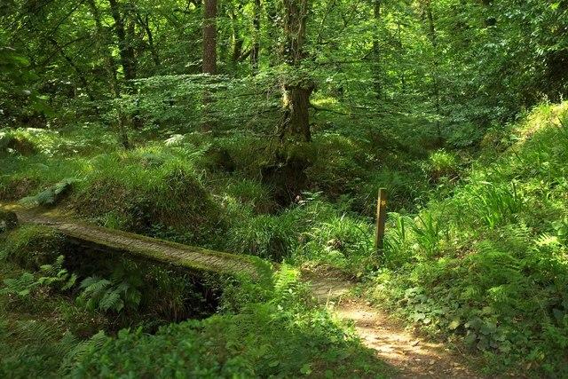 Path at Gidleigh Park