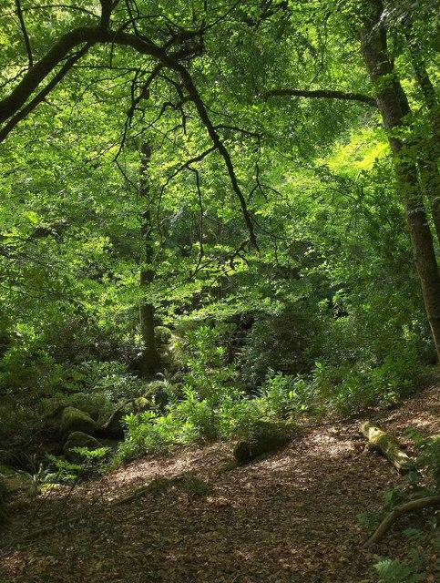Gidleigh park location