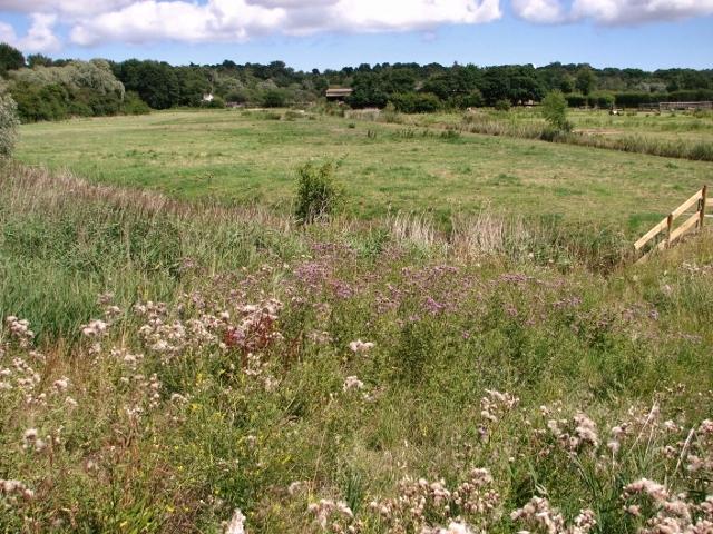 Pastures north of Priory Farm