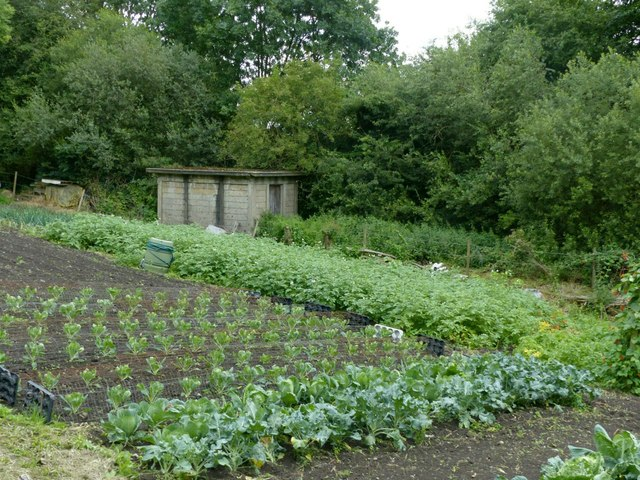 Allotment and concrete hut