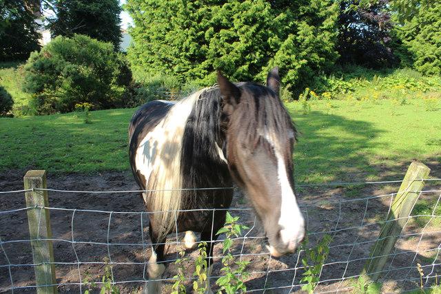 Friendly Horse at Kirkbean