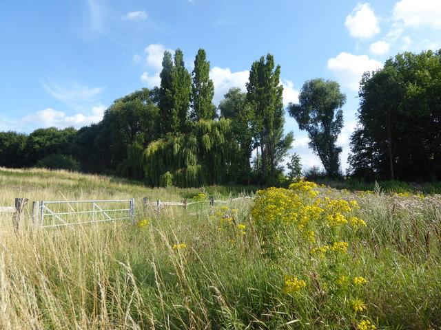 East Wickham Open Space