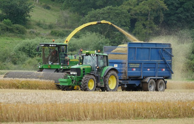 Wholecrop Harvesting Wheat