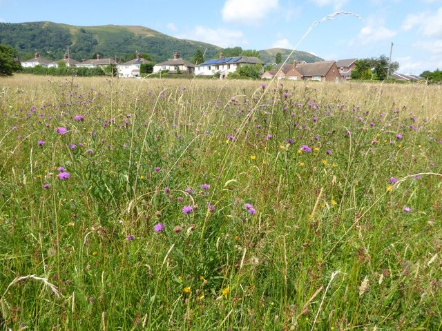 Wild flowers on Malvern Common