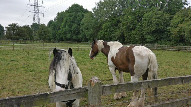 Horses on the Aylestone Meadows