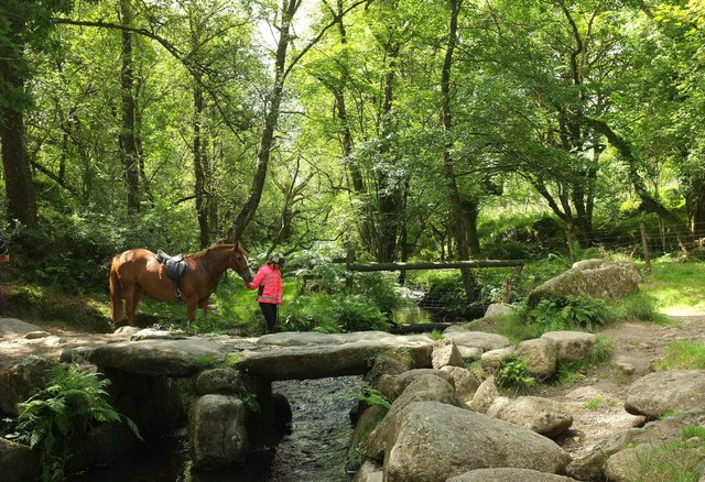 Reluctant equine at the Becka Brook