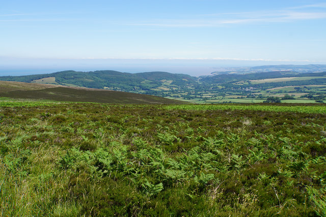 Bracken and heather on Dunkery Hill