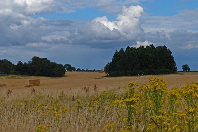 Woodland and farmland at Oadby Lodge Farm