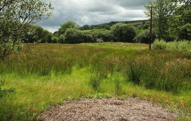 Meadow near Widecombe