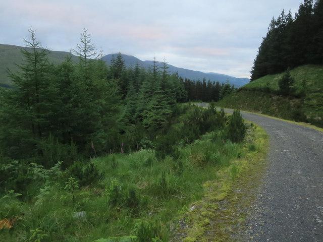 Forest track, Glen Creran