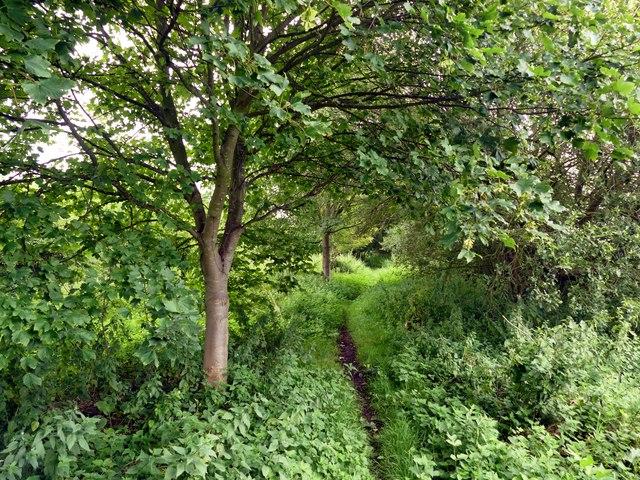 Footpath on Broadbent Gate Moors