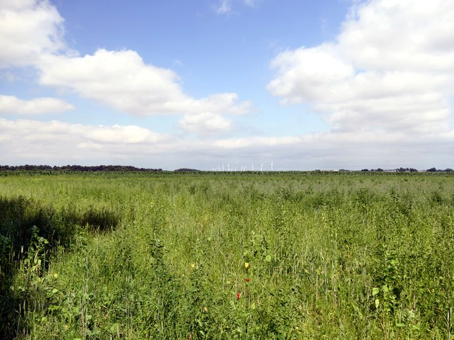Uncultivated field on Crowle Waste