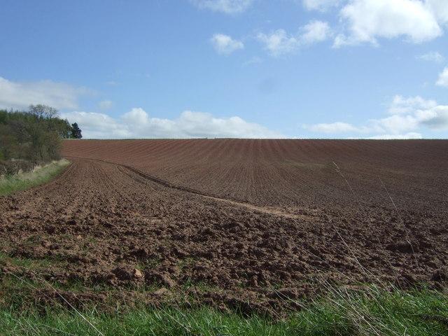 Field near Greenlaw
