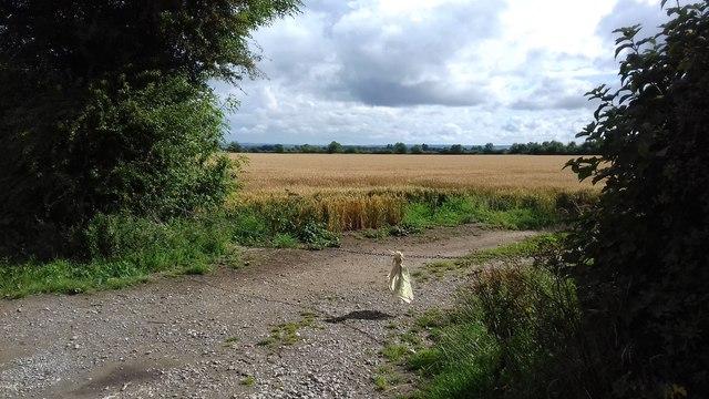 Farmland off Long Lane
