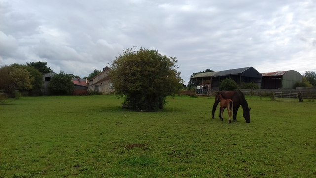 Horse Pasture near Heights Farm - Slingsby