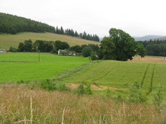 Barley and grass
