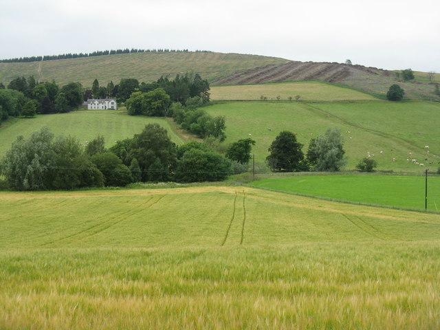 Crops at Glenholm