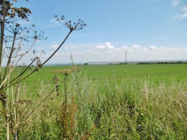 Erlestoke, grassland