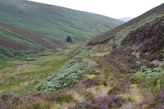Overgrown track, Duncan Gill
