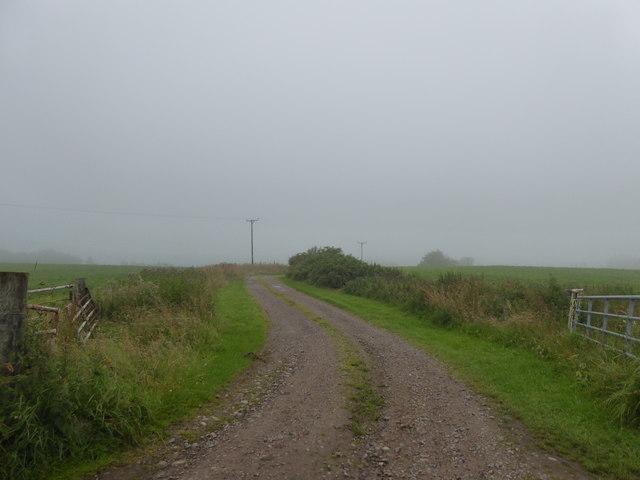 Farm track above Cowies Burn