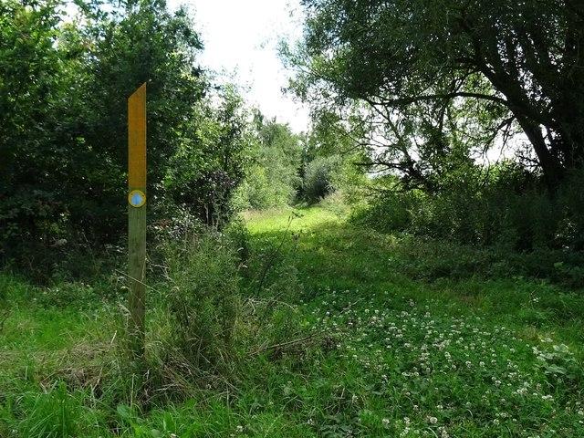 Bridleway through Ludlam or Ludlams Wood