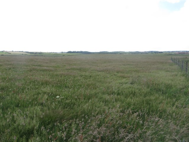 Coastal grassland at Breil Nook