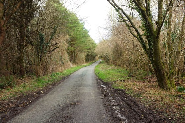 Woodland road to Mount Pleasant
